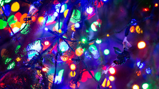 Colorful Christmas Lights on tree branches.